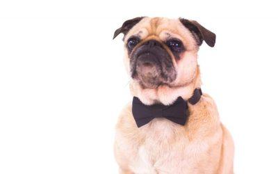 10 consejos básicos para cuidar de tu perro